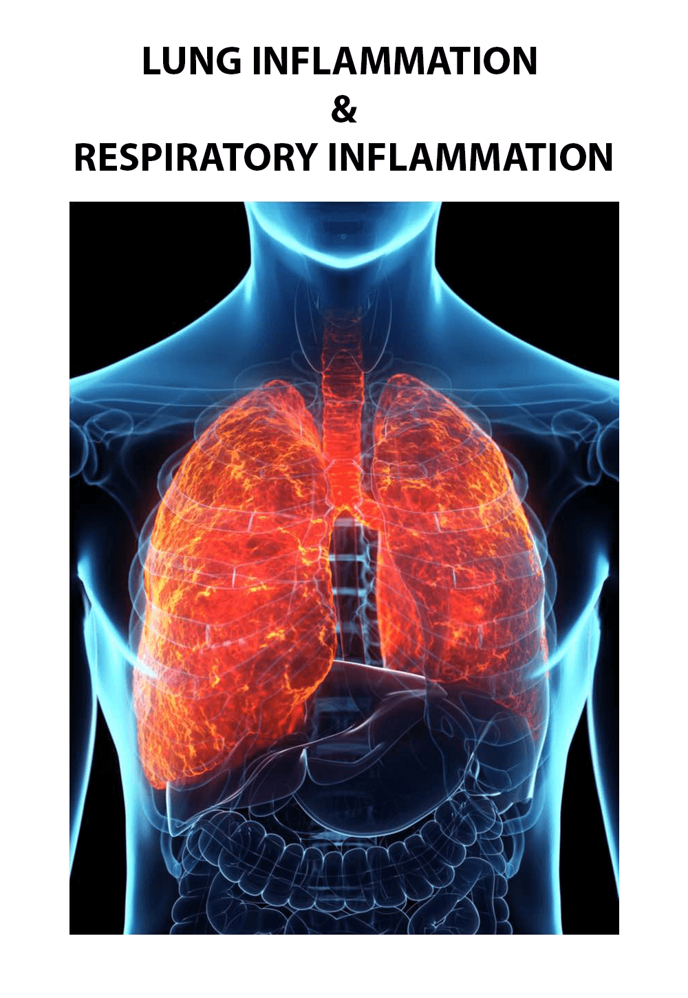 BEE VENOM FOR LUNG INFLAMMATION & RESPIRATORY INFLAMMATION